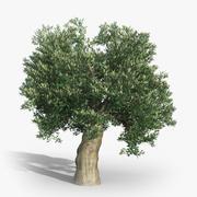 Olive Tree 03 3d model
