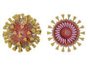 Coronavirus unique 3d model