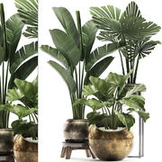 Decorative plants in flower pots for the interior 466A 3d model