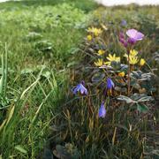 Ensemble d'herbe de printemps V1 3d model