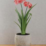 꽃 집 식물 3d model