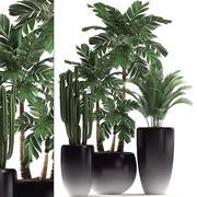 Rośliny ozdobne w doniczkach do wnętrz 470A 3d model