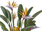 STRELITZIA REGINAE BIRD OF PARADISE 3d model