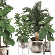 Rośliny ozdobne w doniczkach do wnętrz 474 3d model