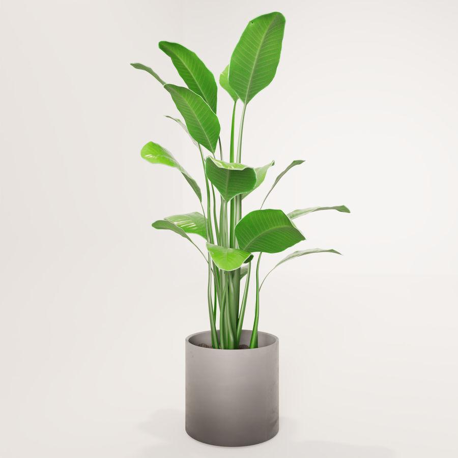 Plante en pot verte royalty-free 3d model - Preview no. 5