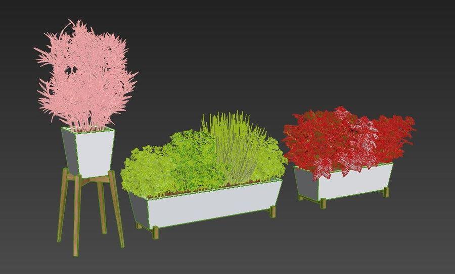 Plantes aux herbes épicées royalty-free 3d model - Preview no. 5
