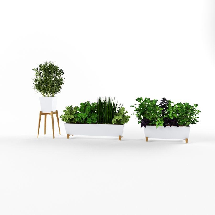 Plantes aux herbes épicées royalty-free 3d model - Preview no. 3