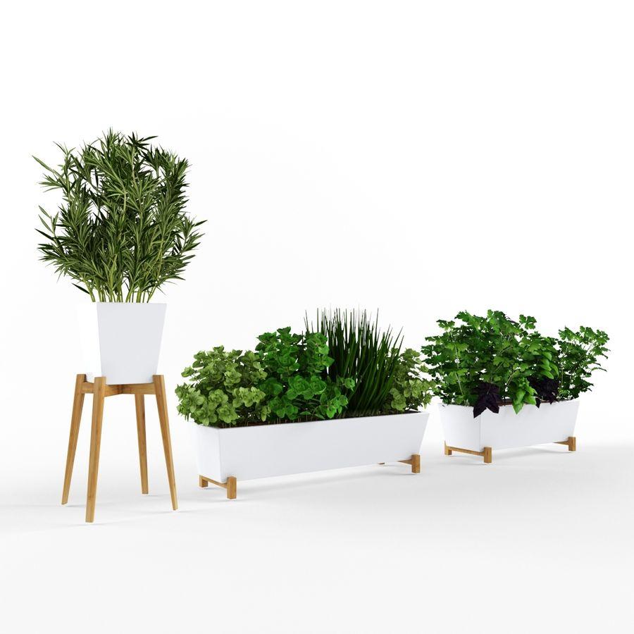 Plantes aux herbes épicées royalty-free 3d model - Preview no. 1