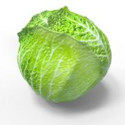 Green Cabbage 3d model
