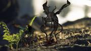 外来昆虫 3d model