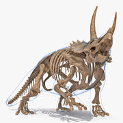 Triceratops Skeleton Fossil with Transparent Skin Rigged 3d model