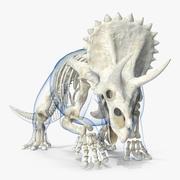 Triceratops Skeleton with Transparent Skin Rigged 3d model