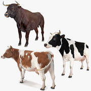Bull and Cows Rigged Collection voor Cinema 4D 3d model