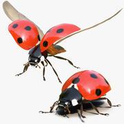 LadyBug Rigged Collection for Cinema 4D 3d model