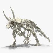 Triceratops Horridus Skeleton Rigged 3d model