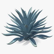 Big Agave Tequilana Blue Agave Plant 3d model