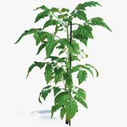Groene stam en tomatenbladeren 3d model