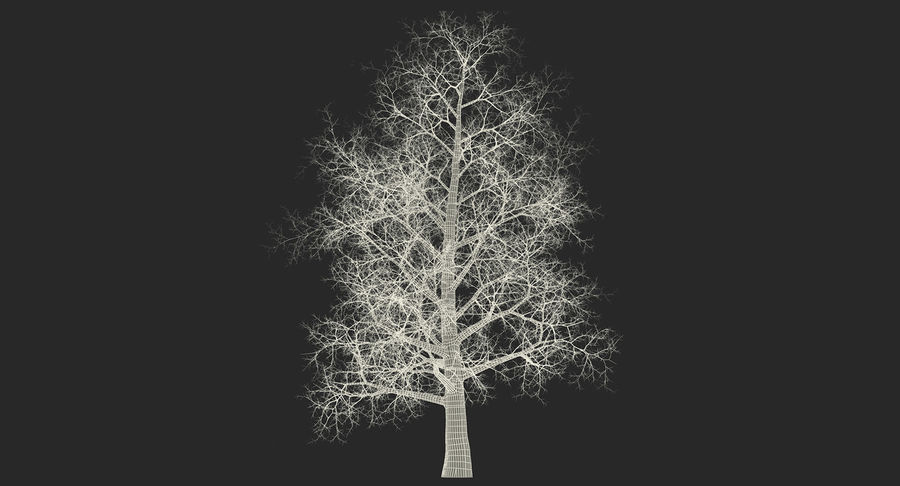 Winter Trees Collection 5 royalty-free 3d model - Preview no. 61
