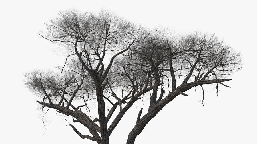 Winter Trees Collection 5 royalty-free 3d model - Preview no. 29
