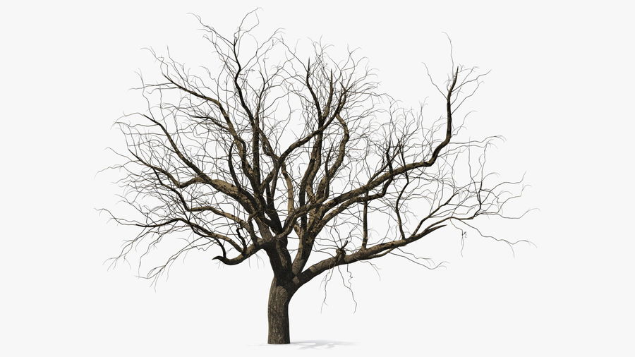 Winter Trees Collection 5 royalty-free 3d model - Preview no. 3