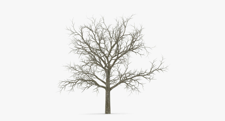 Winter Trees Collection 5 royalty-free 3d model - Preview no. 53