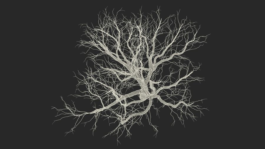 Winter Trees Collection 5 royalty-free 3d model - Preview no. 57