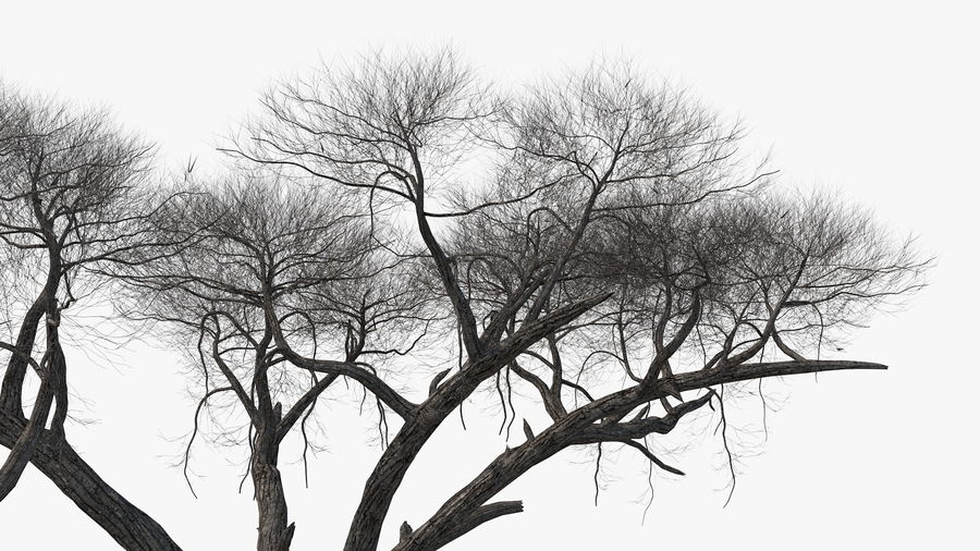 Winter Trees Collection 5 royalty-free 3d model - Preview no. 30