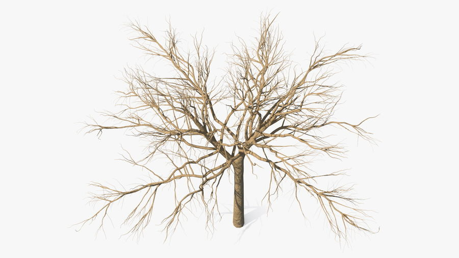 Winter Trees Collection 5 royalty-free 3d model - Preview no. 17