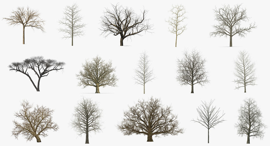 Winter Trees Collection 5 royalty-free 3d model - Preview no. 2
