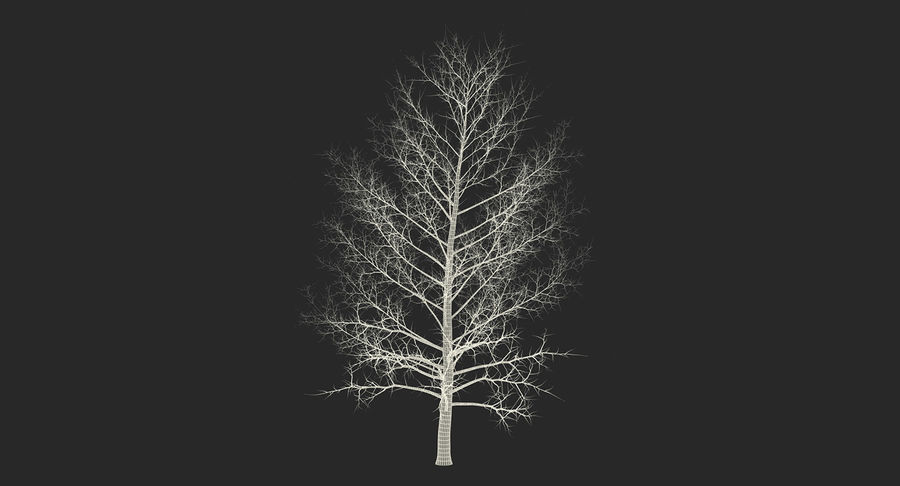 Winter Trees Collection 5 royalty-free 3d model - Preview no. 65