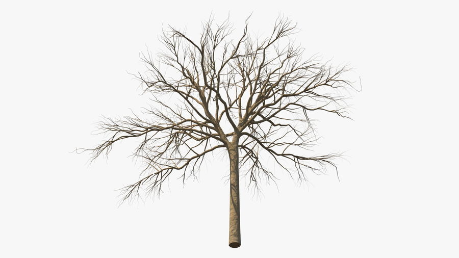 Winter Trees Collection 5 royalty-free 3d model - Preview no. 14