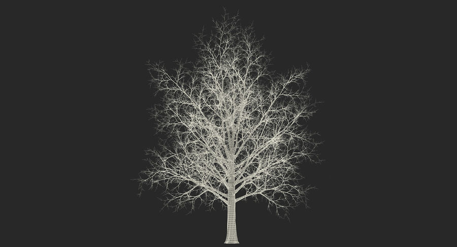 Winter Trees Collection 5 royalty-free 3d model - Preview no. 67