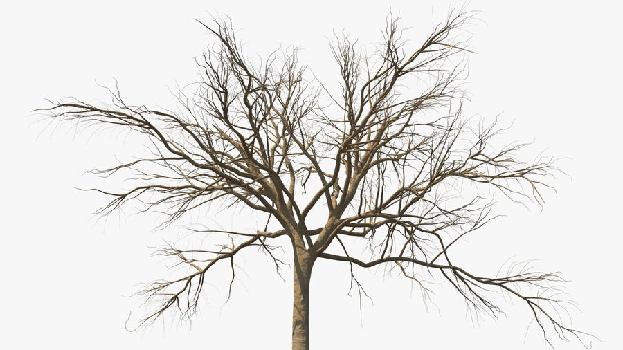 Winter Trees Collection 5 royalty-free 3d model - Preview no. 18