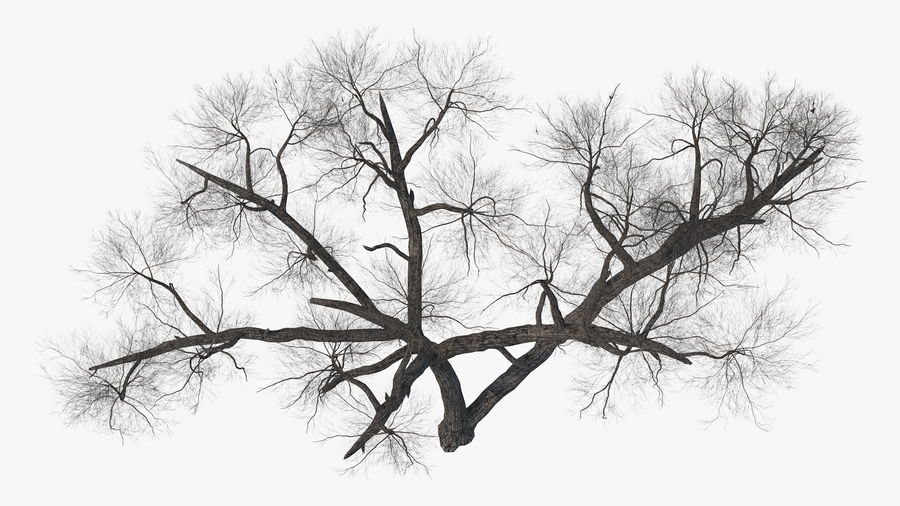 Winter Trees Collection 5 royalty-free 3d model - Preview no. 28