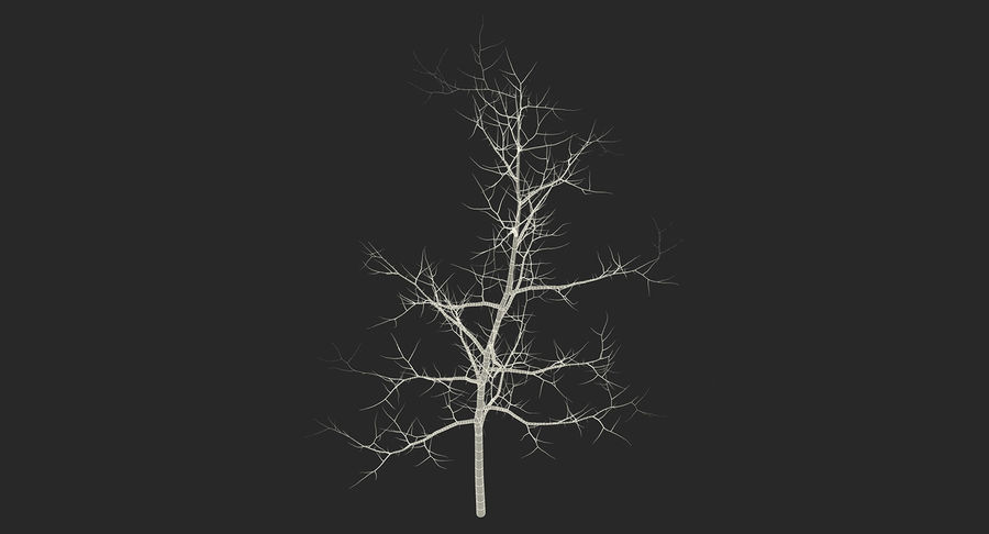 Winter Trees Collection 5 royalty-free 3d model - Preview no. 71