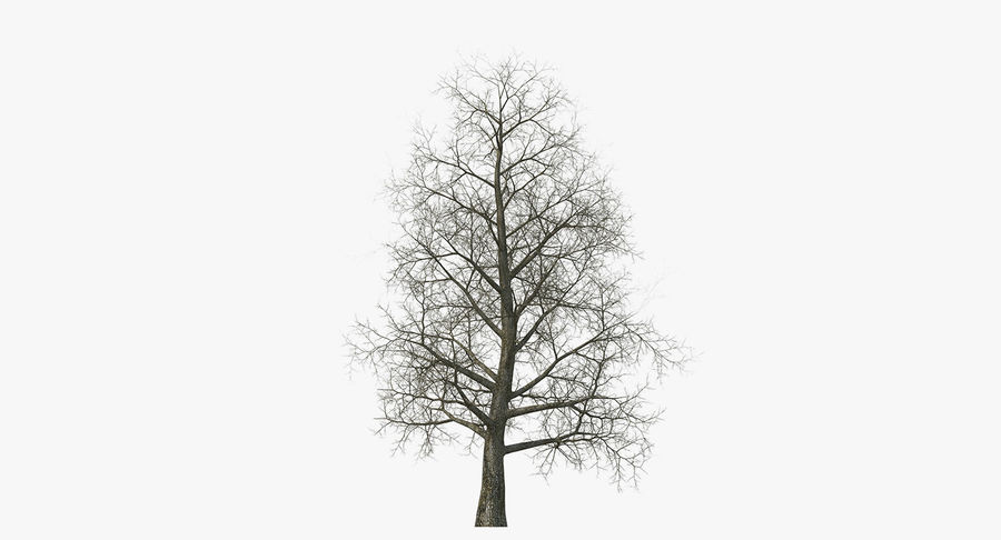 Winter Trees Collection 5 royalty-free 3d model - Preview no. 35