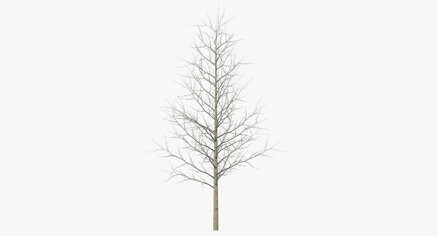 Winter Trees Collection 5 royalty-free 3d model - Preview no. 45