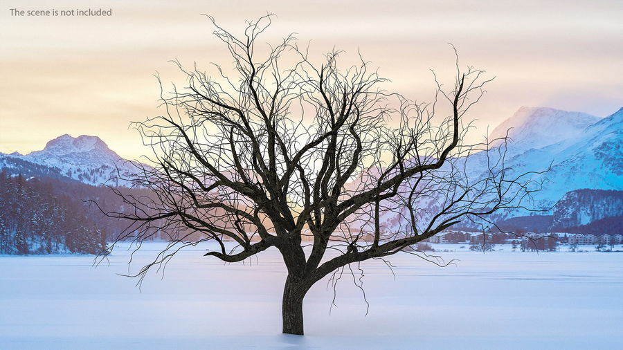 Winter Trees Collection 5 royalty-free 3d model - Preview no. 4