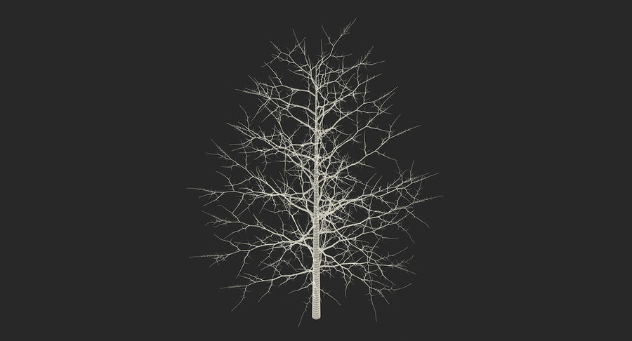 Winter Trees Collection 5 royalty-free 3d model - Preview no. 63