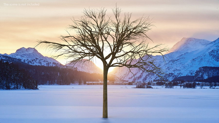 Winter Trees Collection 5 royalty-free 3d model - Preview no. 15