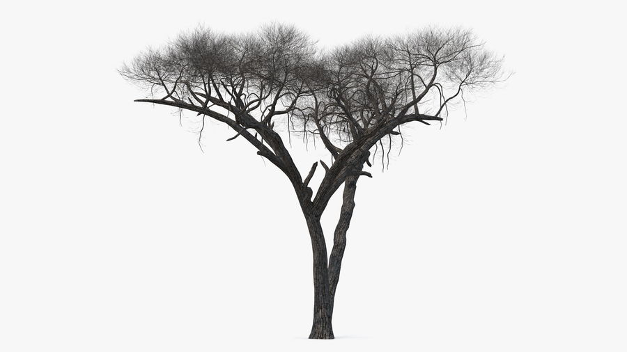 Winter Trees Collection 5 royalty-free 3d model - Preview no. 27