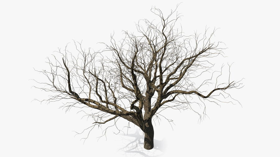 Winter Trees Collection 5 royalty-free 3d model - Preview no. 7