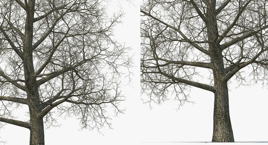 Winter Trees Collection 5 royalty-free 3d model - Preview no. 36