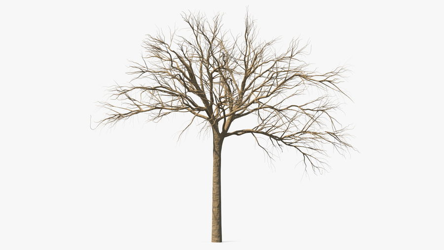 Winter Trees Collection 5 royalty-free 3d model - Preview no. 16