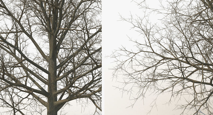 Winter Trees Collection 5 royalty-free 3d model - Preview no. 48