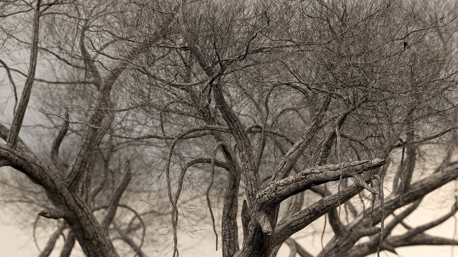 Winter Trees Collection 5 royalty-free 3d model - Preview no. 25