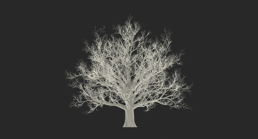 Winter Trees Collection 5 royalty-free 3d model - Preview no. 60