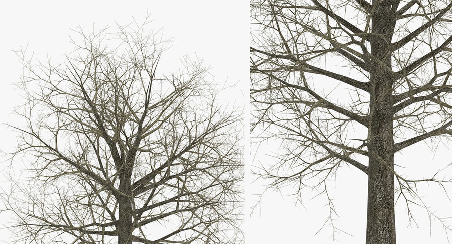 Winter Trees Collection 5 royalty-free 3d model - Preview no. 38