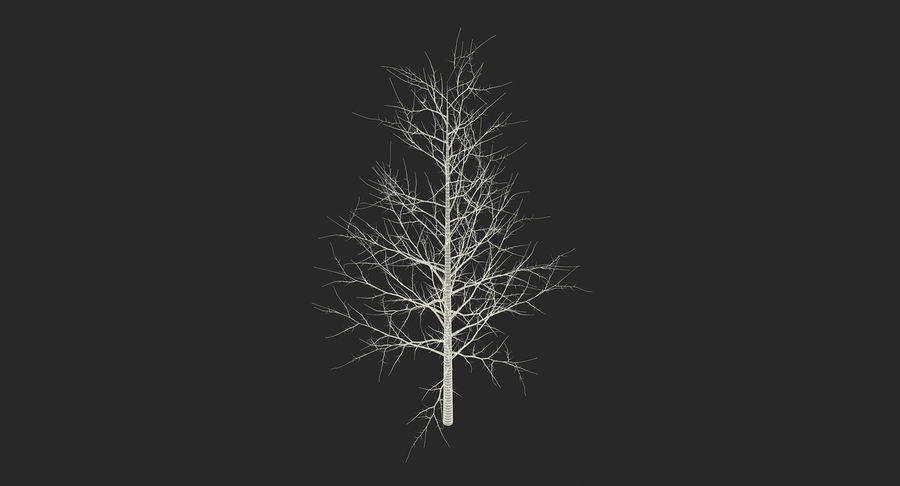 Winter Trees Collection 5 royalty-free 3d model - Preview no. 66