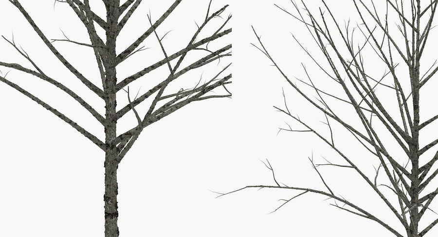 Winter Trees Collection 5 royalty-free 3d model - Preview no. 50